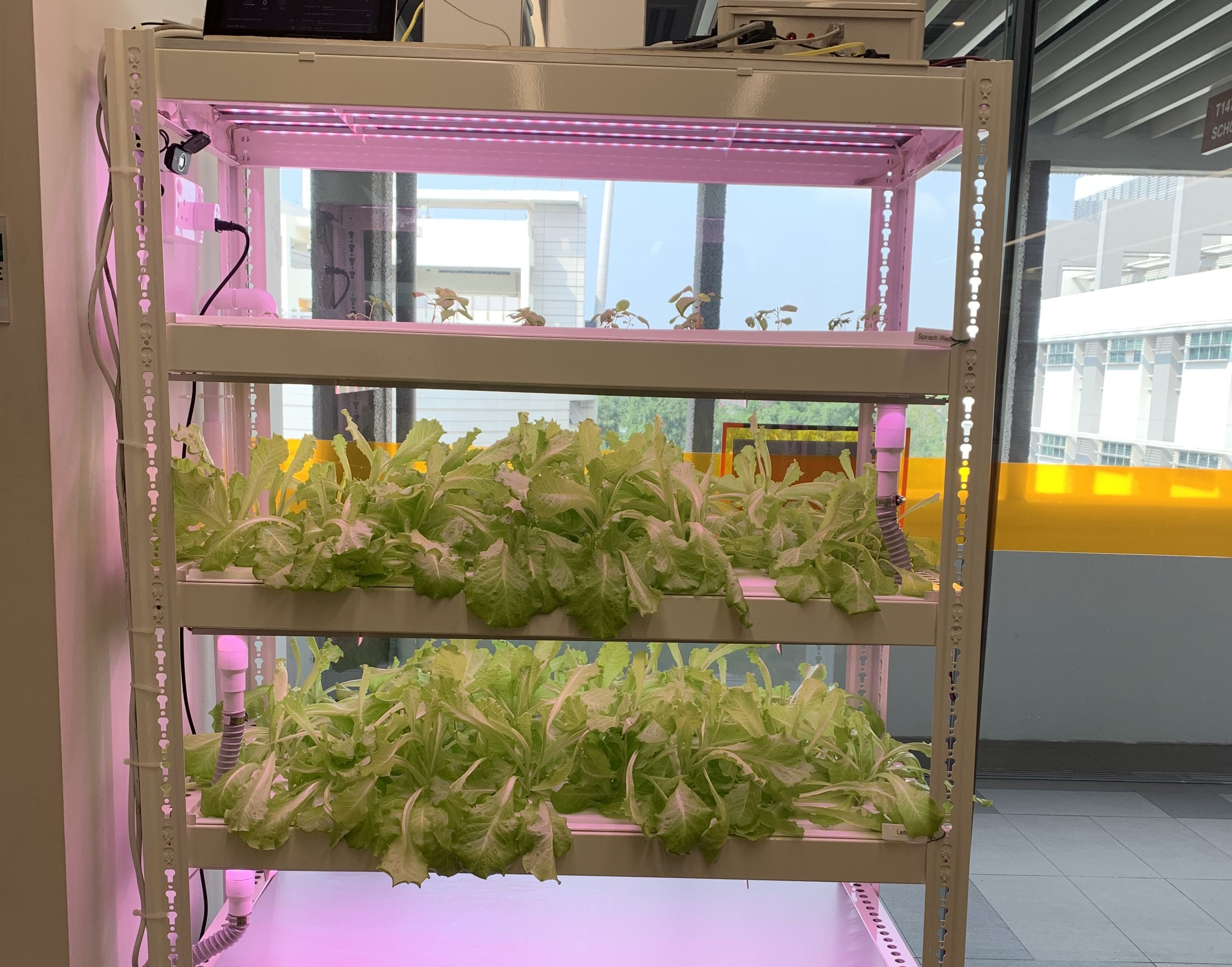 photo2_verticalfarming